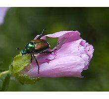 The Scourge - Japanese Beetle Photographic Print