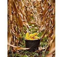 Bucket full of corn Photographic Print
