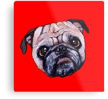 Butch the Pug - Red Metal Print