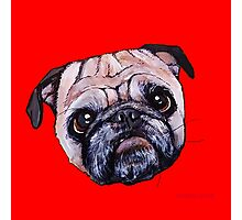 Butch the Pug - Red Photographic Print