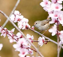 Thornbill by AKunde