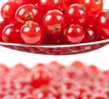 Red currant on white background Sticker