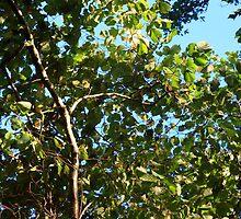 www.lizgarnett.com - Oct 01 by Liz Garnett