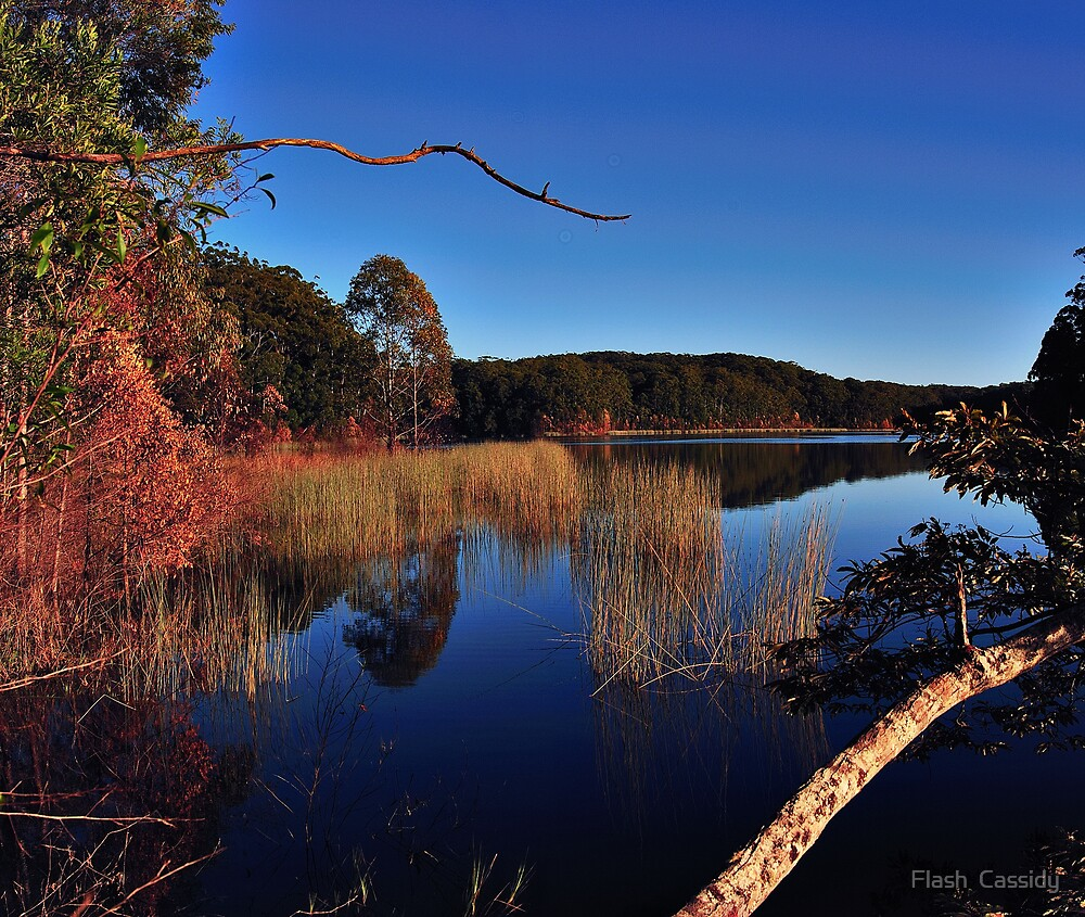 """Cooloolabin lake by Phineous """"Flash""""   Cassidy"""