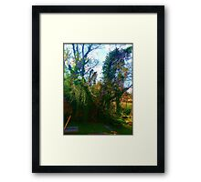 Lost Thicket Framed Print