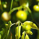 Autumn Fruit by Alison Howson