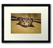 Eagle Owl Eyes Framed Print