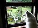 Sylvie at the Kitchen Window   I'm home girl!! by Jack McCabe