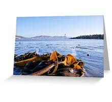Seaweed 2 ~ Lyme Regis Greeting Card