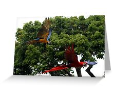 Macaws in Flight Greeting Card