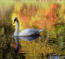 Swan in the Fall by Gail Falcon