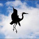 Heron's Dance by Jörg Holtermann