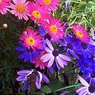 My garden by shortarcasart