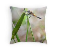 Four Spotted Skimmer Throw Pillow