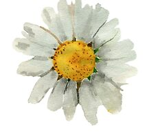 Chamomile by Emily Squirrell