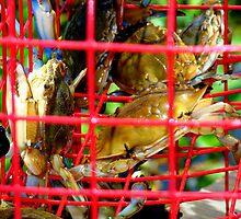 Crabs In CrabTrap by Wanda Raines
