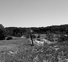 Desolate by Amber Kipp