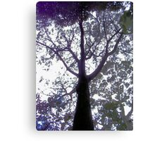 Have you hugged a tree lately? Canvas Print