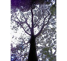 Have you hugged a tree lately? Photographic Print