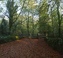 Autumn in Coole Park by John Quinn