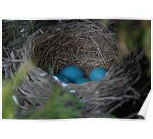 Robin's Eggs Poster