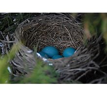 Robin's Eggs Photographic Print