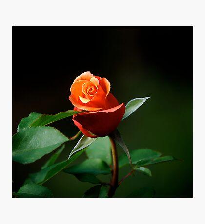 Good Night My Love Photographic Print