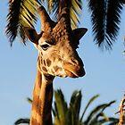 Giraffe by Andy Bulka