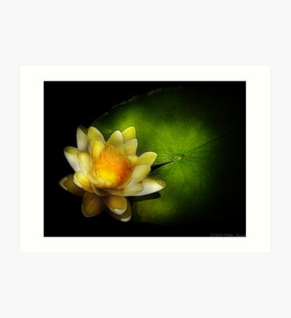 Nymphaea  Chromatella - Yellow Lilly Art Print
