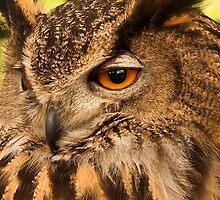 Owl by Eugene Francis Cummings