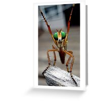 roberfly Greeting Card