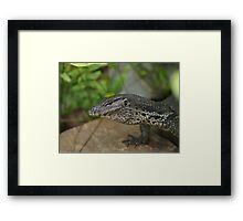 Varanus Salvator Framed Print
