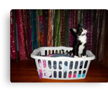 Adorable kitty in a hamper - 2 Canvas Print