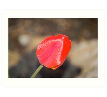 Front Yard Tulip Art Print