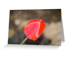 Front Yard Tulip Greeting Card
