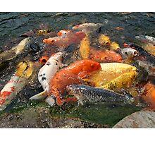 Koi Fish (1 of 3) Photographic Print