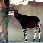 Okapi, 105 viewings, 2 coments, 1 person favored by dragonsnare