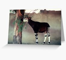 Okapi, 105 viewings, 2 coments, 1 person favored Greeting Card