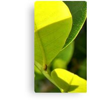 The neon of green leaves in morning light Canvas Print