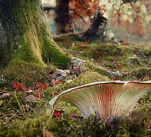 The Faerystool by Becca  Cusworth