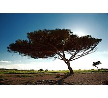 Wind Swept Photographic Print