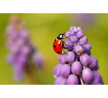Spring time Photographic Print