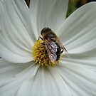Busy Bee by CinB