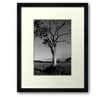 Ageing Gracefully Framed Print