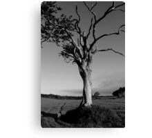 Ageing Gracefully Canvas Print