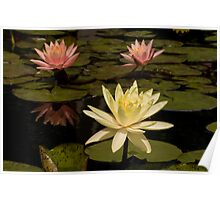 Waterlilies Poster