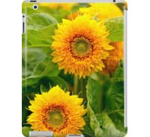Yellow daisies closeup in the garden iPad Case/Skin