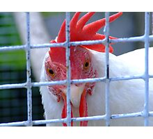 White Hen Photographic Print