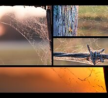 Oh what a tangled web we weave by GD Artography