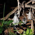 Possum like creature meditating by Andy Bulka